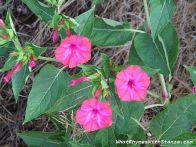 7August flower