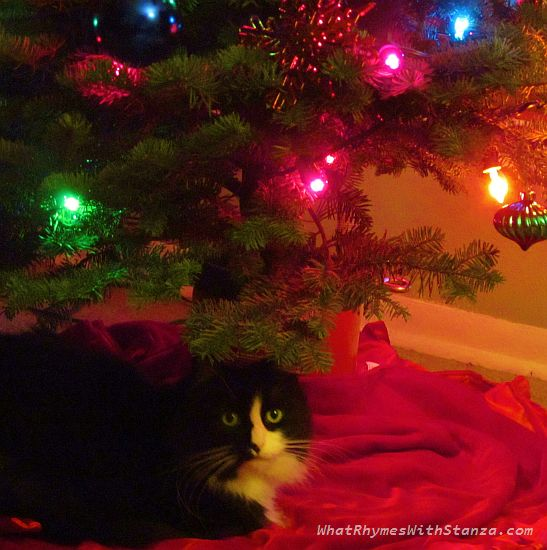 sabs under tree