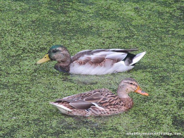 8 sitting duck