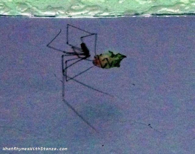 15-spider-web