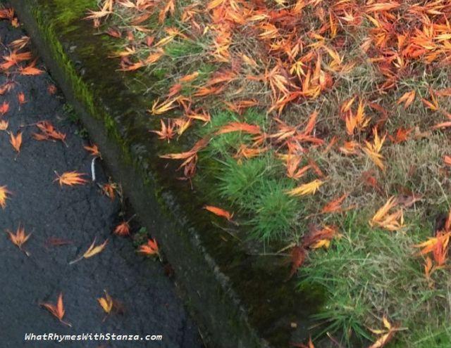 18b-autumn