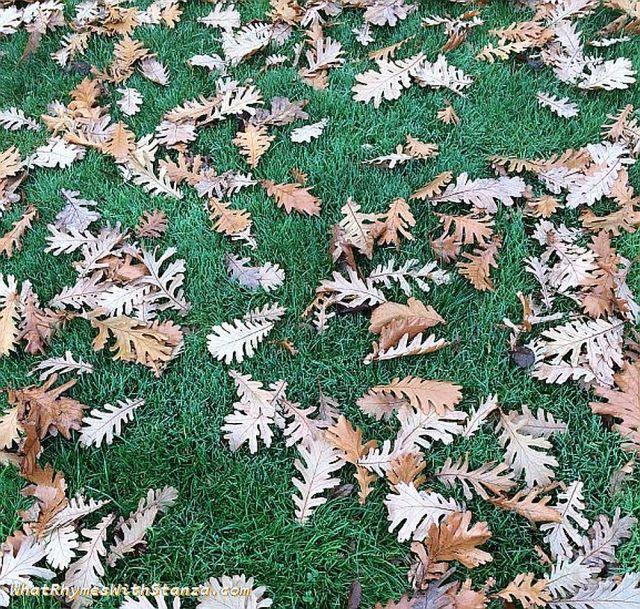 l-leaves