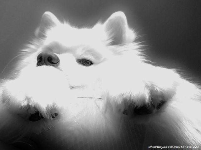 paws2
