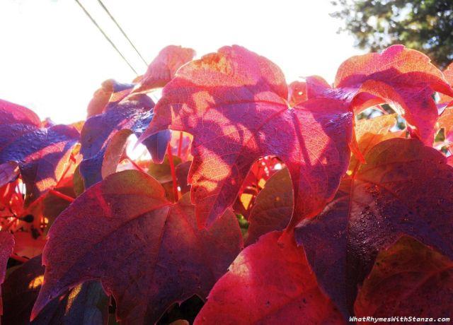 30 leaves1