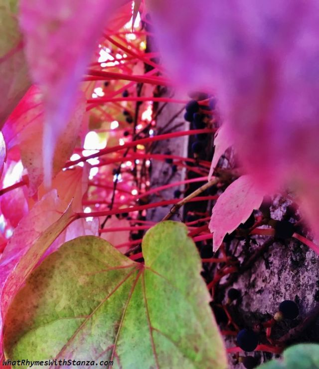 30 leaves2