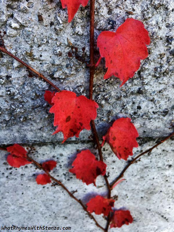 30 leaves3