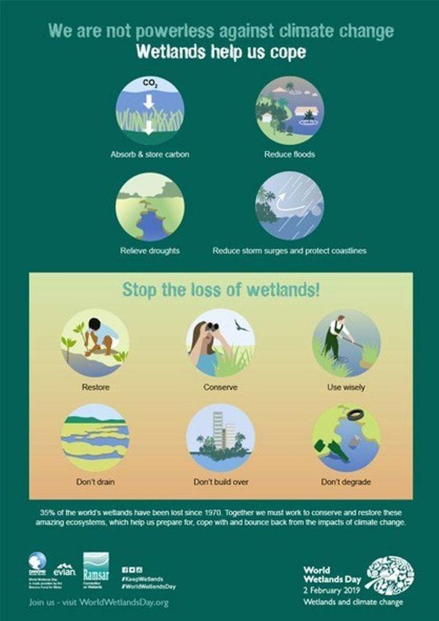 wetland Infographic